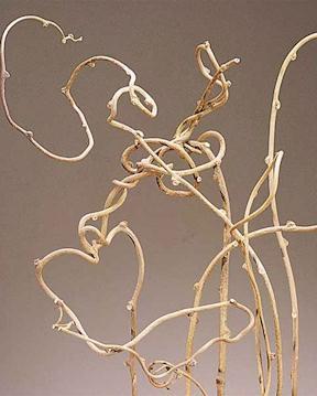 kiwi-vine-branches_med